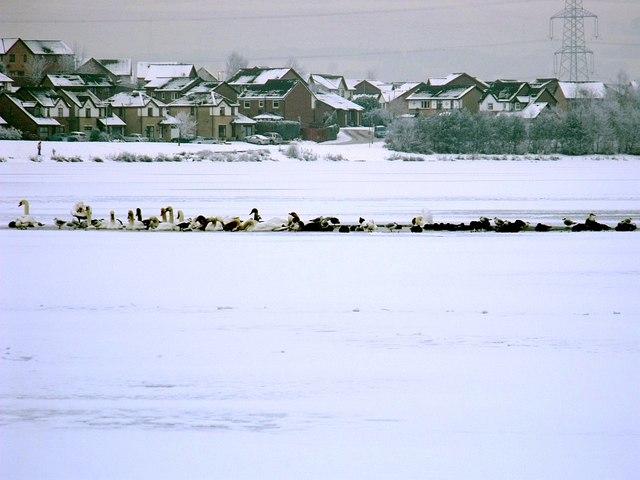 Freezing Fowl on Broadwood Loch - geograph.org.uk - 1637887