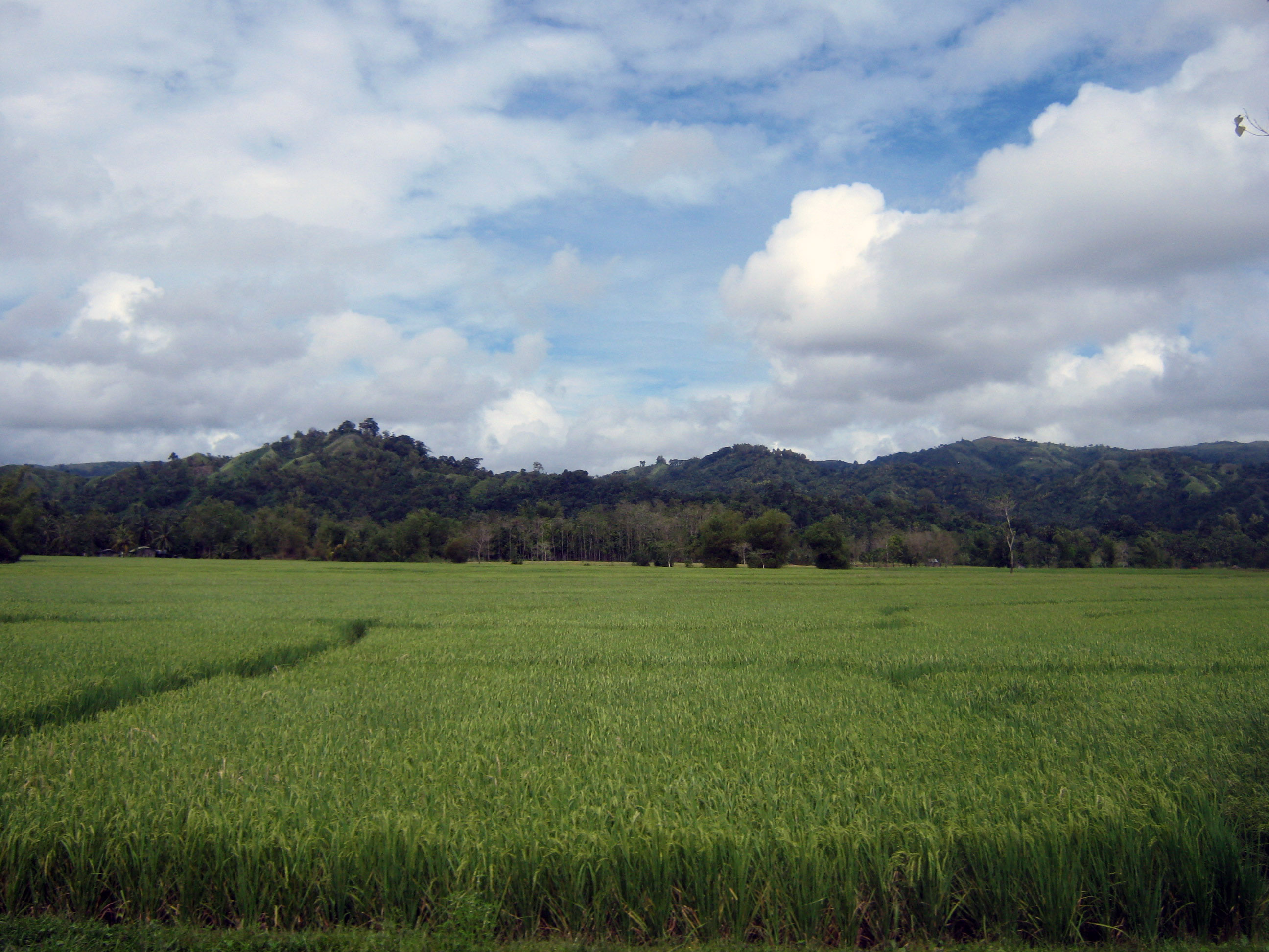 Hinoba-an Philippines  city photo : Rice field in Hinoba an Atio, Philippines