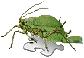 Hmyzák-pahýl.png