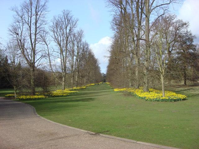 Lime Avenue, Nowton Park - geograph.org.uk - 978232