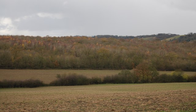 Longham Wood - geograph.org.uk - 1618405