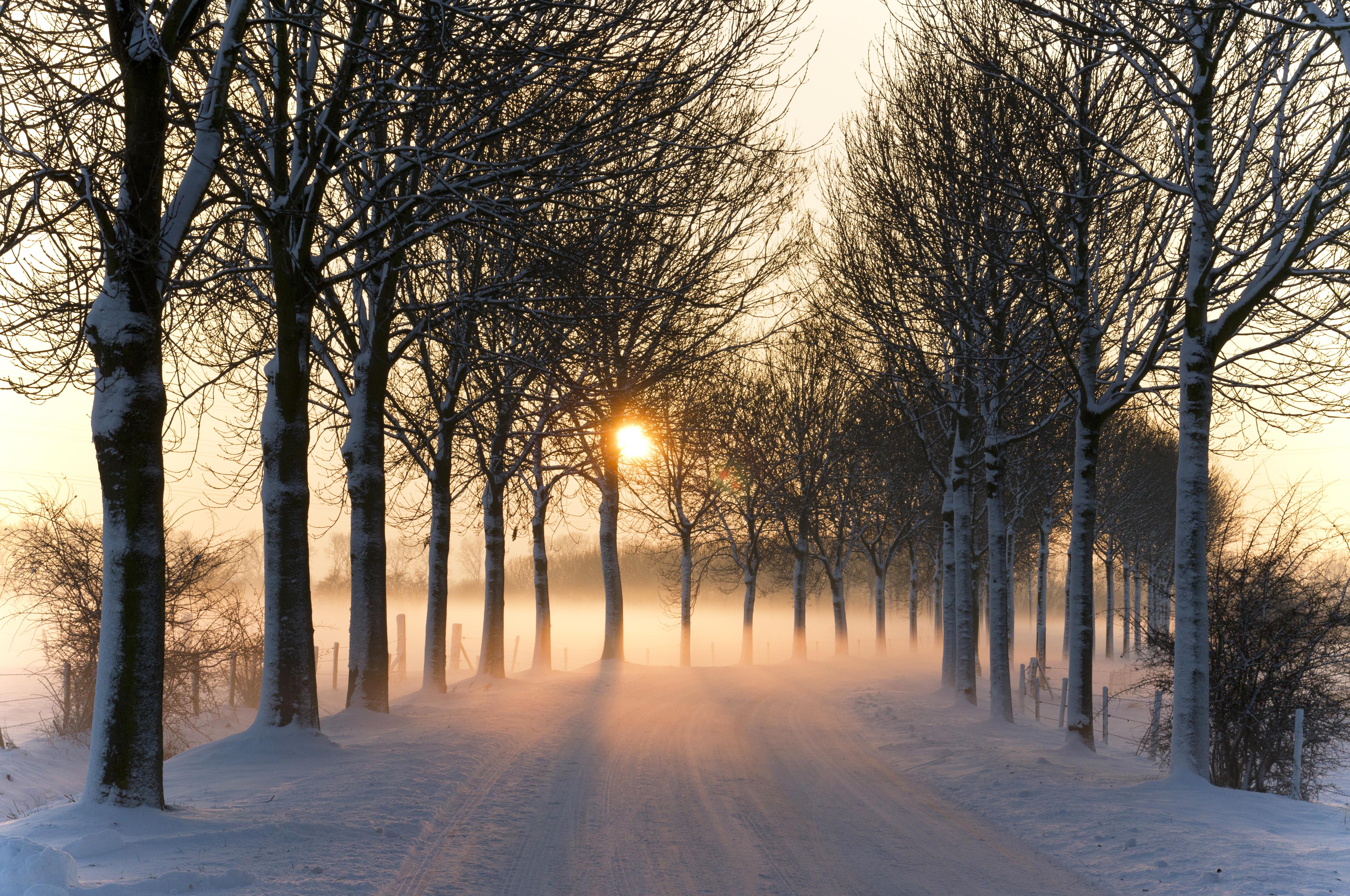 Misty winter afternoon (5277611659).jpg