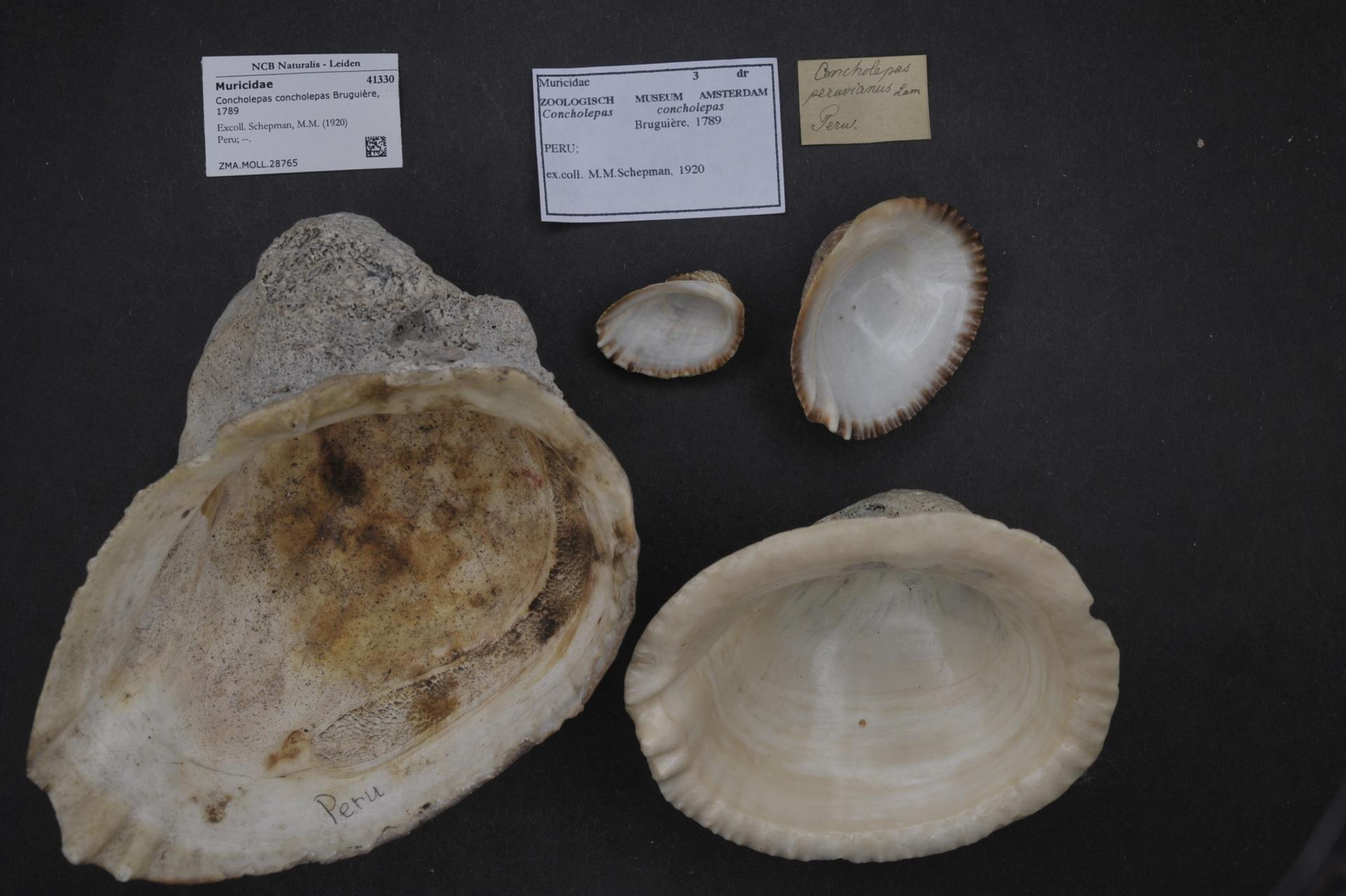 FileNaturalis Biodiversity Center