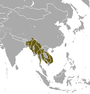 Файл:Northern Pig-tailed Macaque area.png