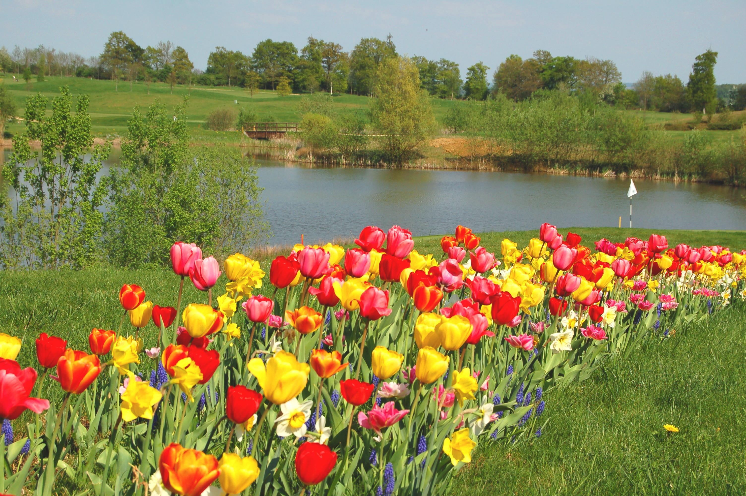 File Preisch met tulpen JPG   Wikimedia Commons