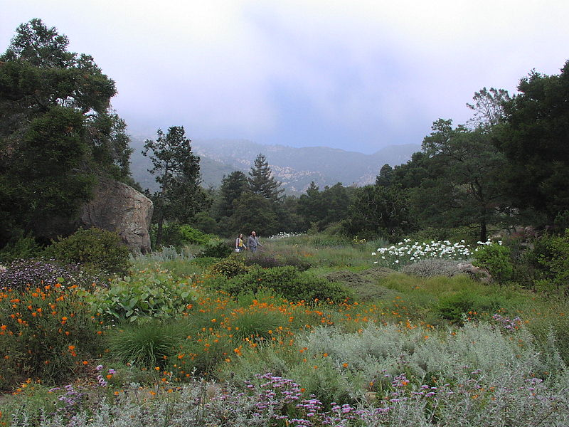 SBBotanicGarden1. The Santa Barbara Botanic Garden Is A Living Museum Where  Collections Based Research ...