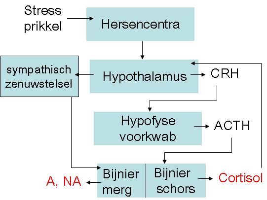 afbouwschema corticosteroiden