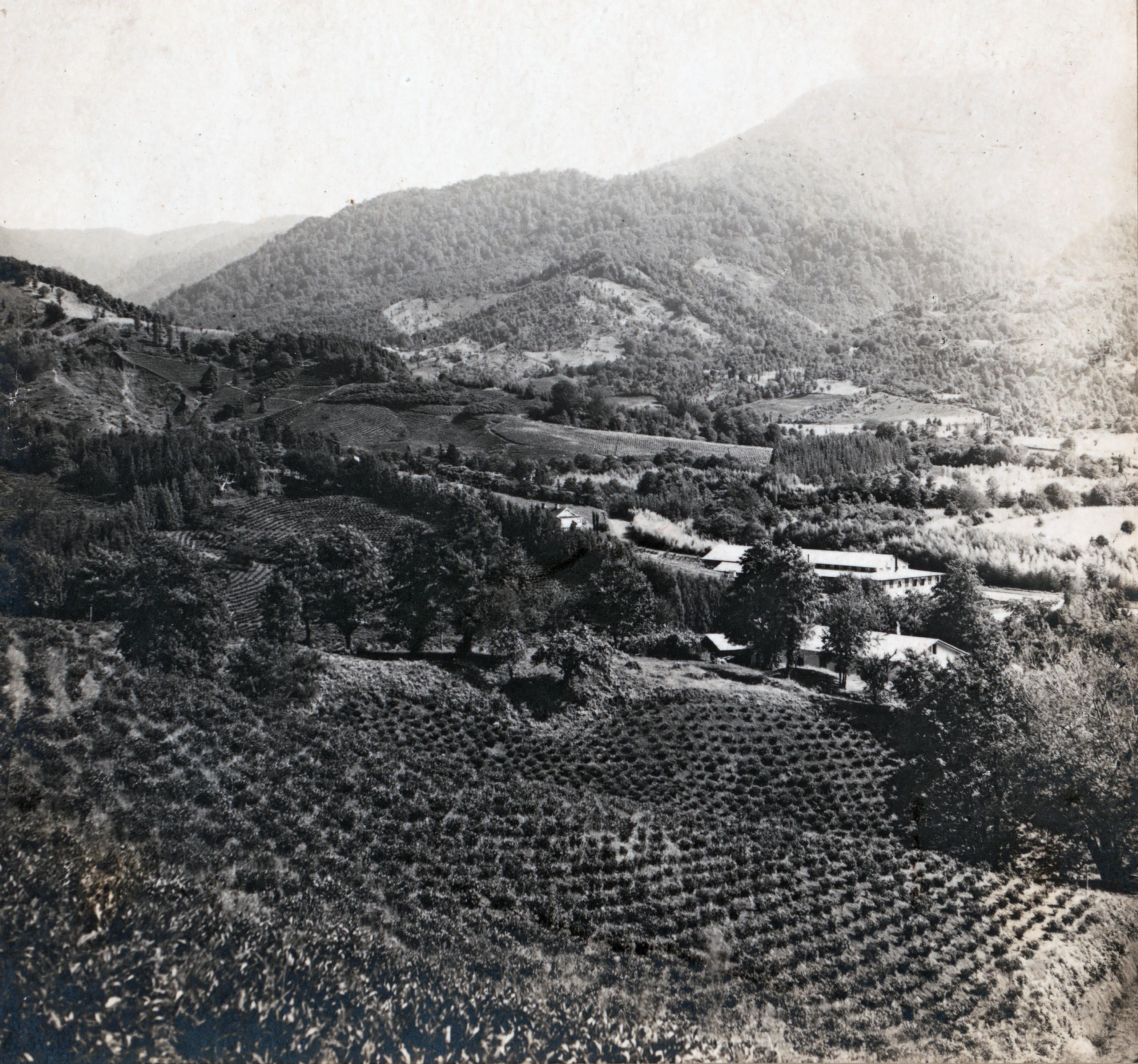 Tea plantations in Chakva.jpg