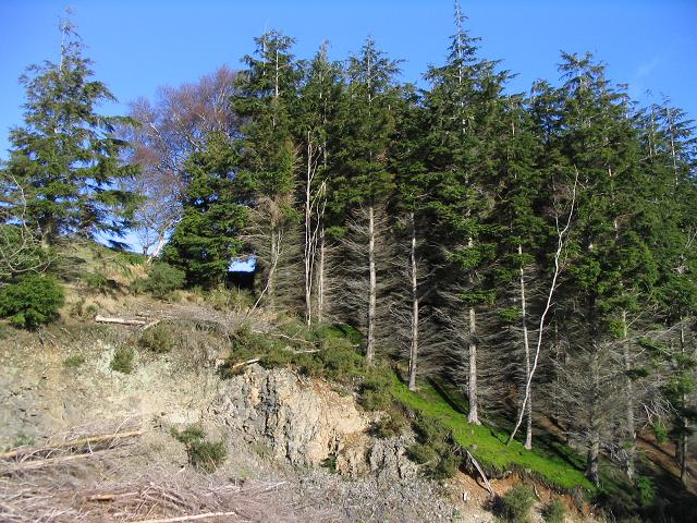 Trees near the Clwydian Way - geograph.org.uk - 327341