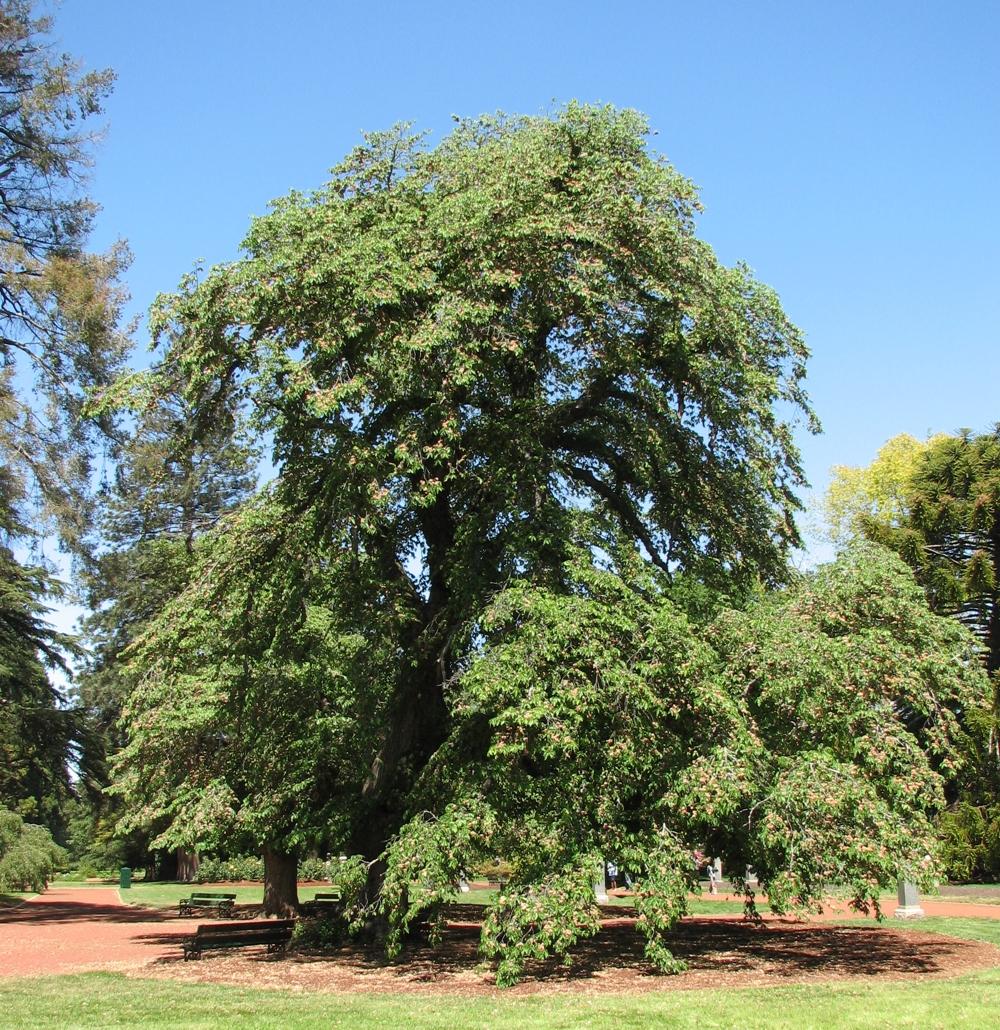 The Elm Tree Tea Room Chacewater