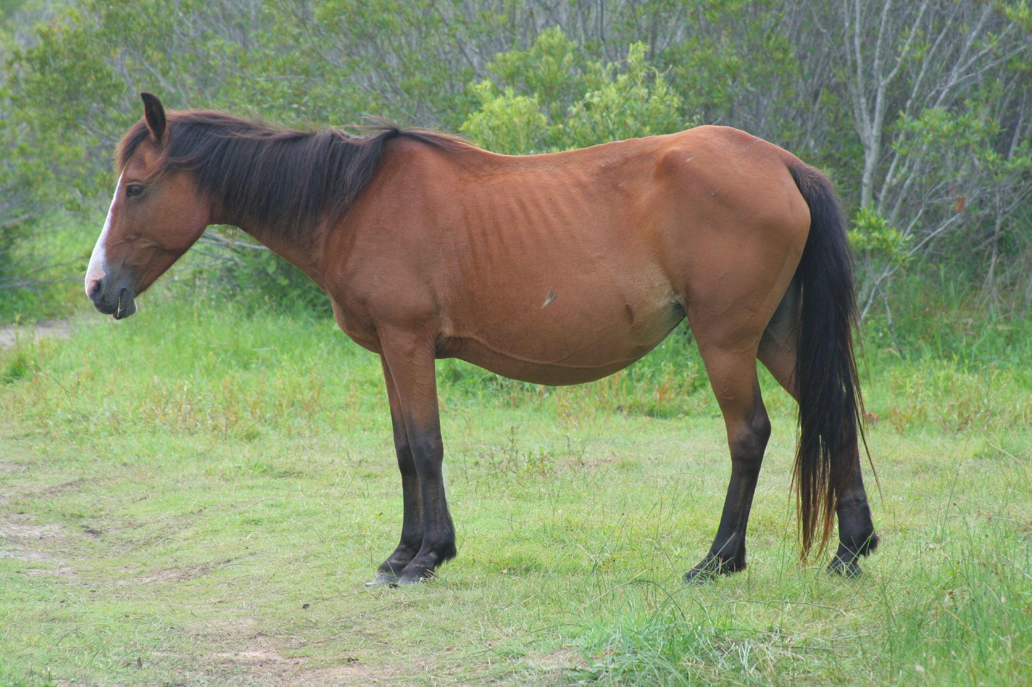 l'entretien du vieux cheval