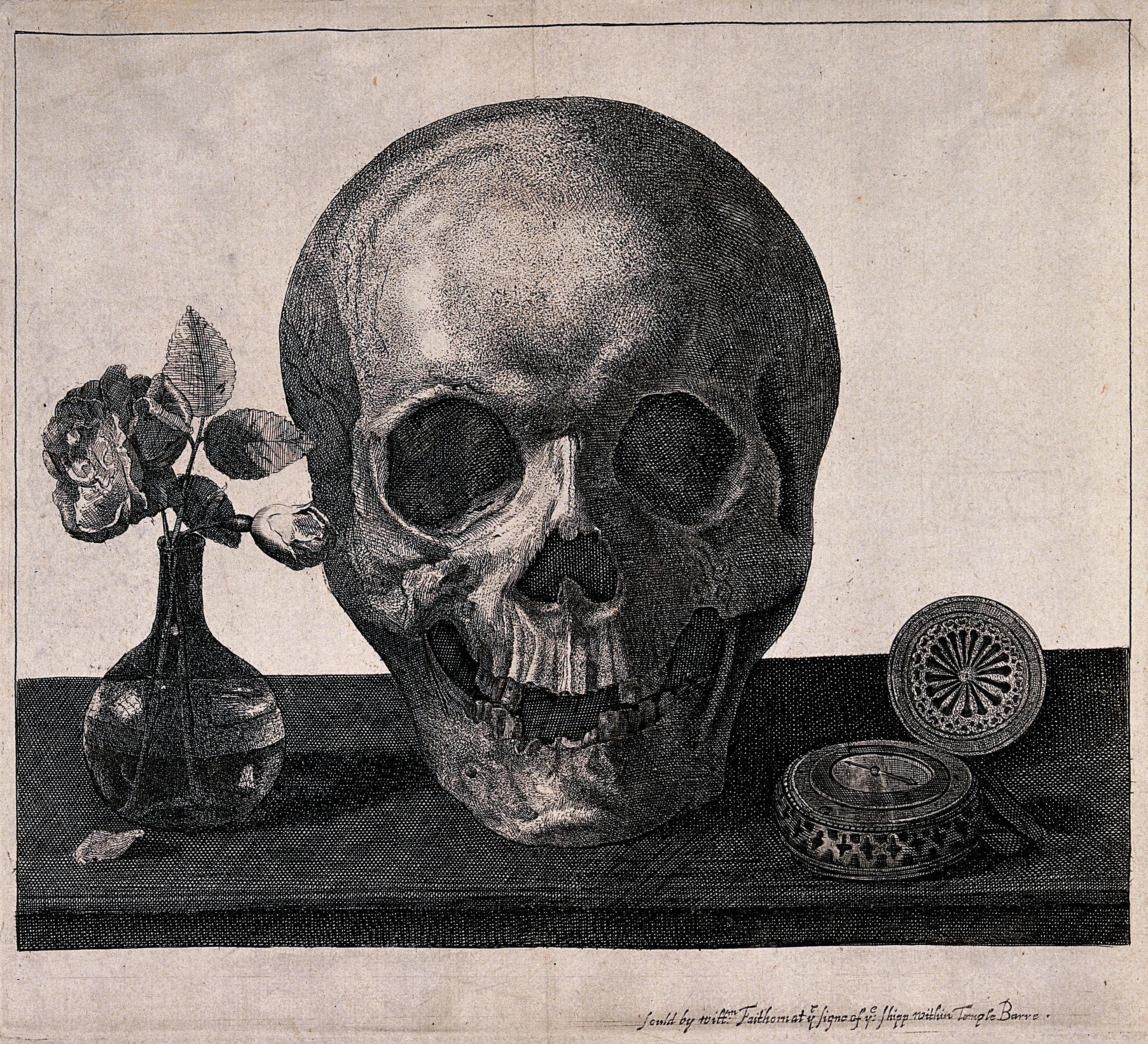 skull   AnatomyBox