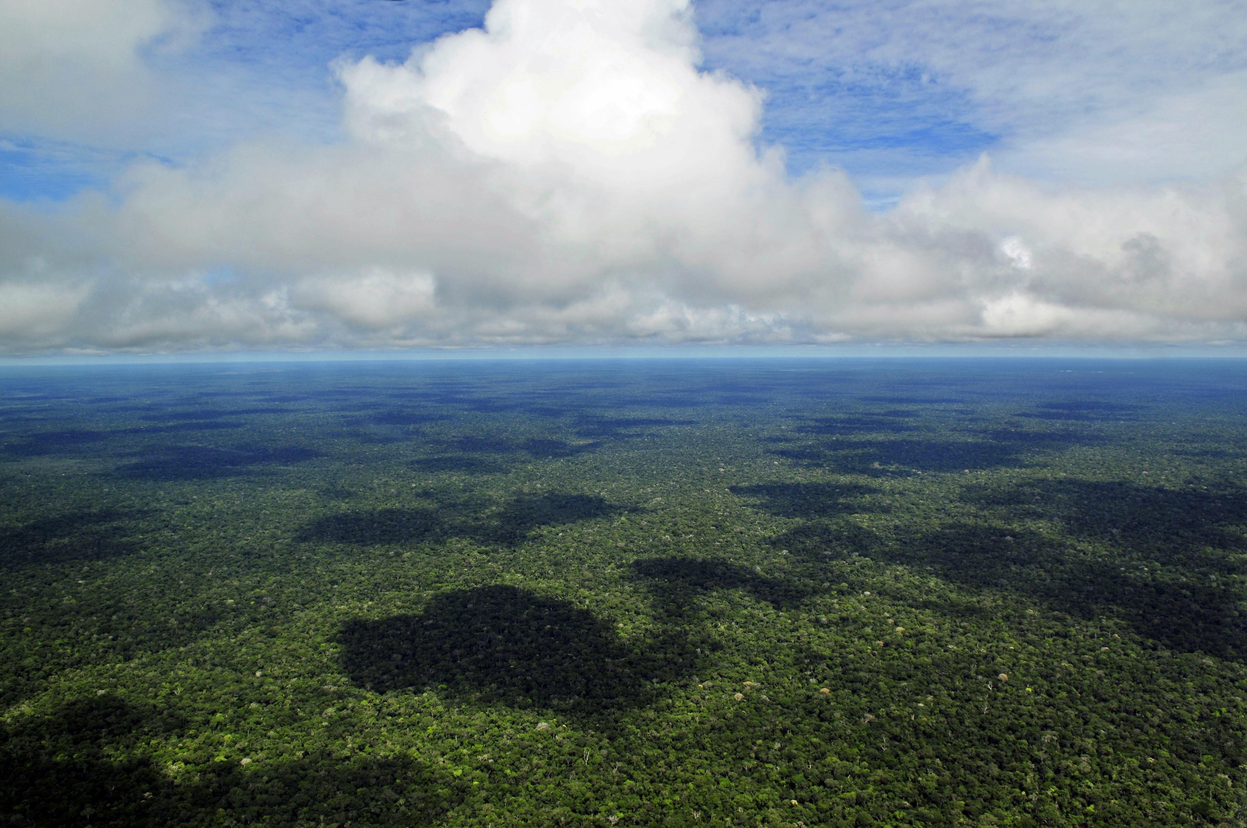 Veja o que saiu no Migalhas sobre Amazônia