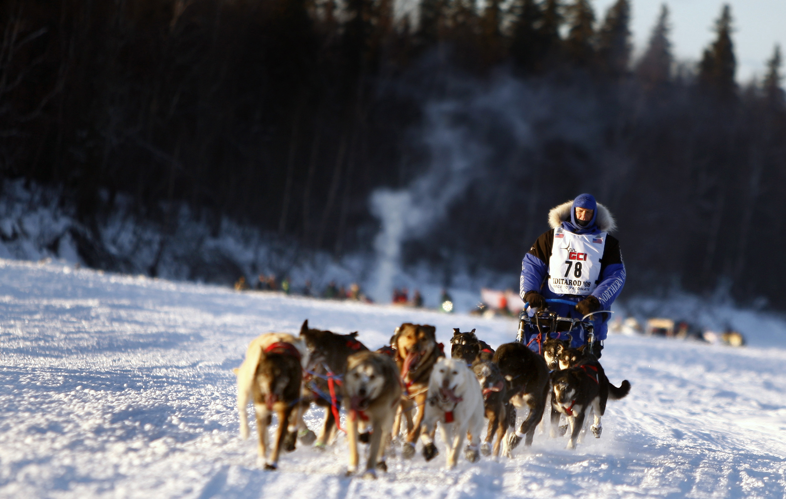 Juneau Alaska Dogs For Sale