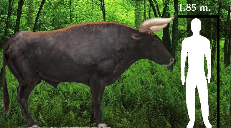 Aurochs Bull Si...