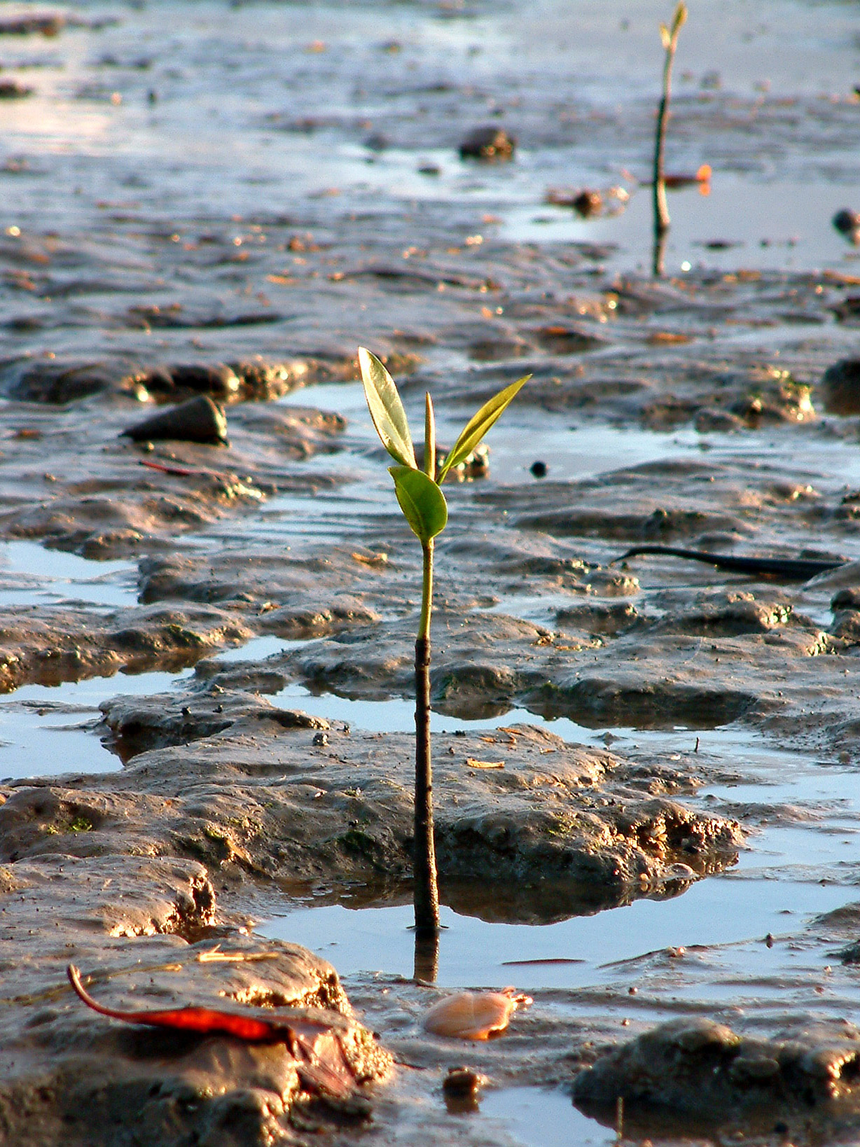 Stand tall like a Magrove Seedling by incorporating strength training into your healthy lifestyle