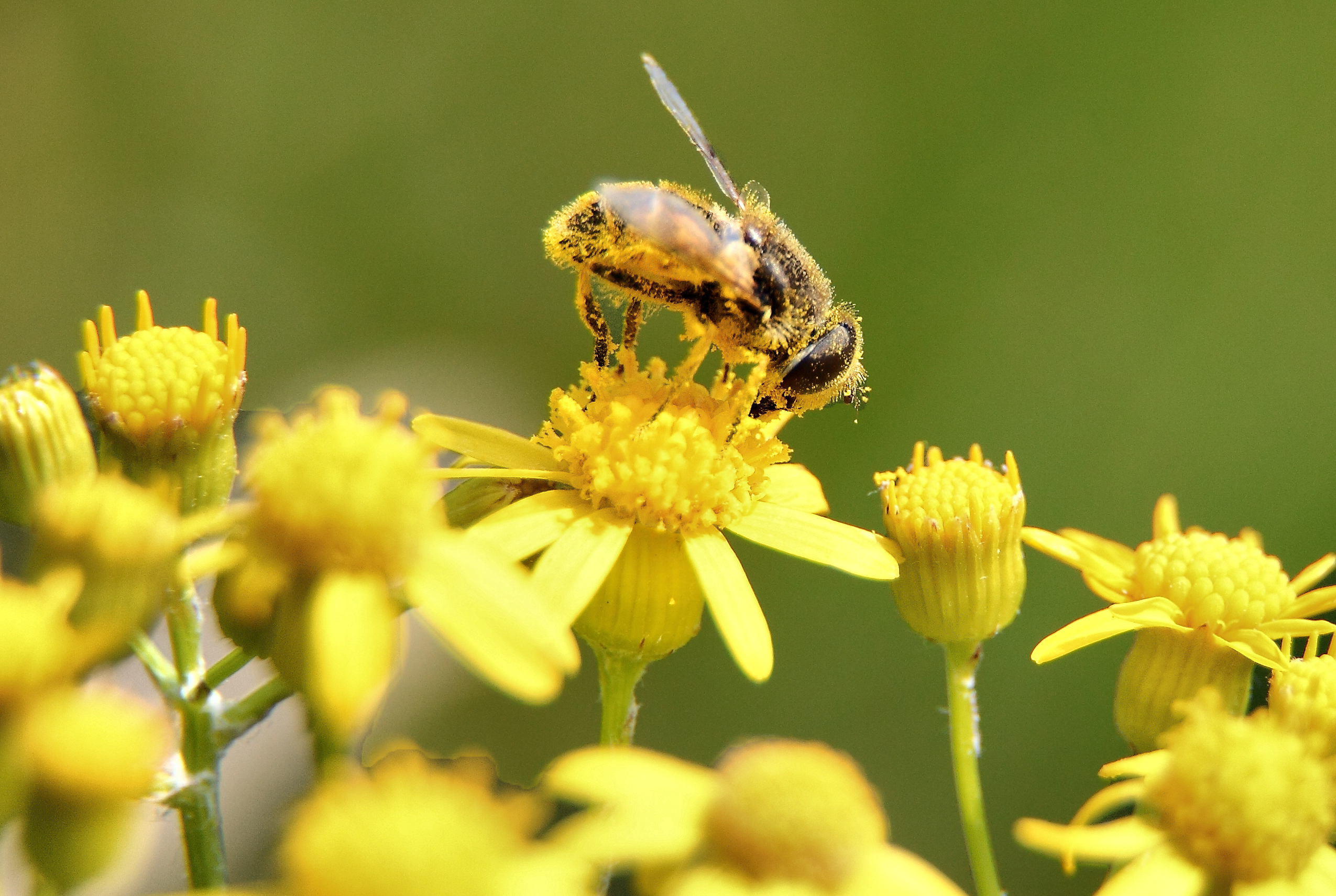 18 bee