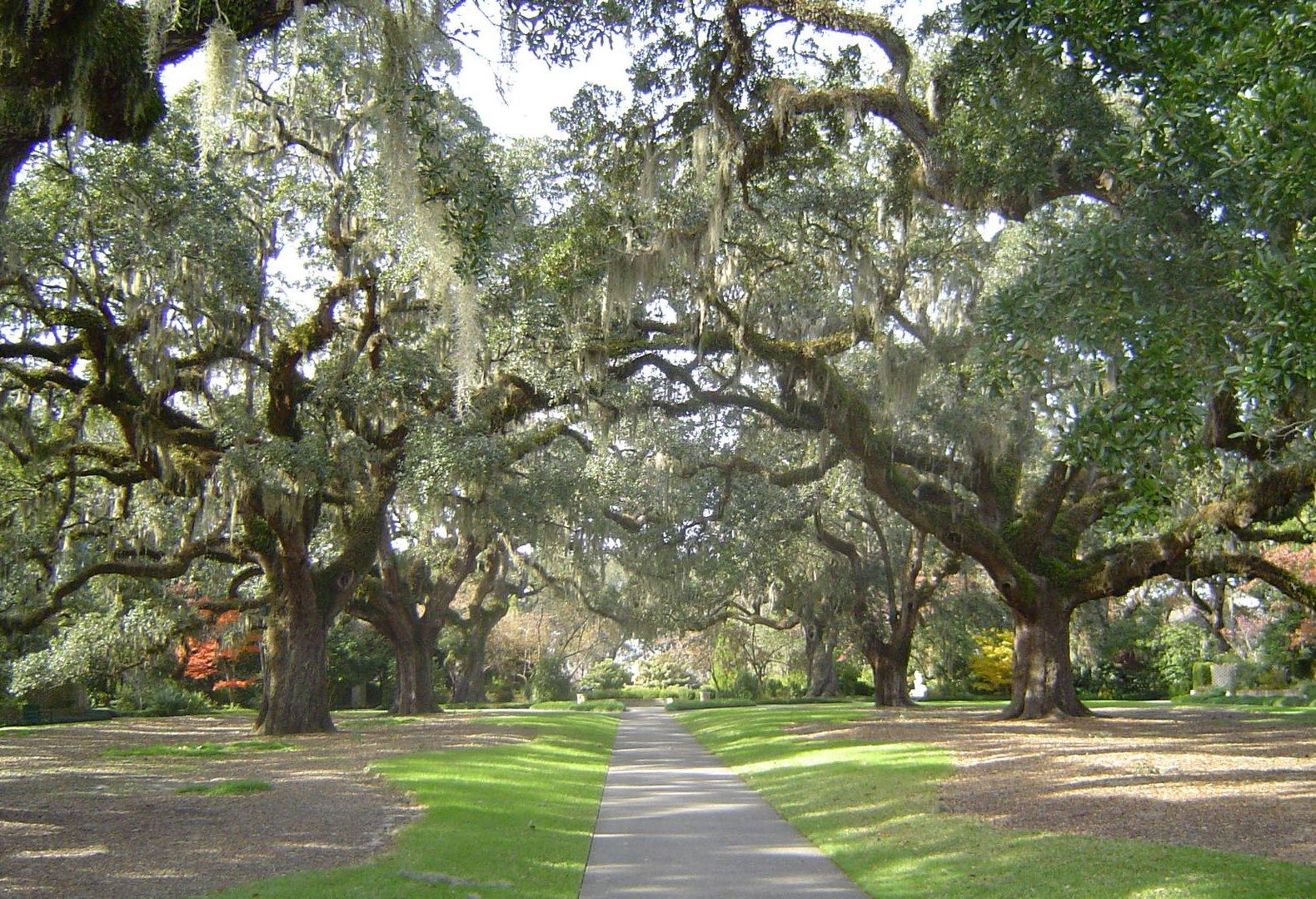 High Quality File:Brookgreen Gardens Oak Alley1