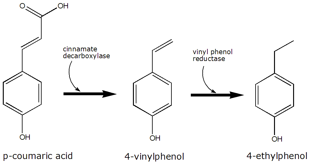 how to draw terpene biosysnthesis reactions