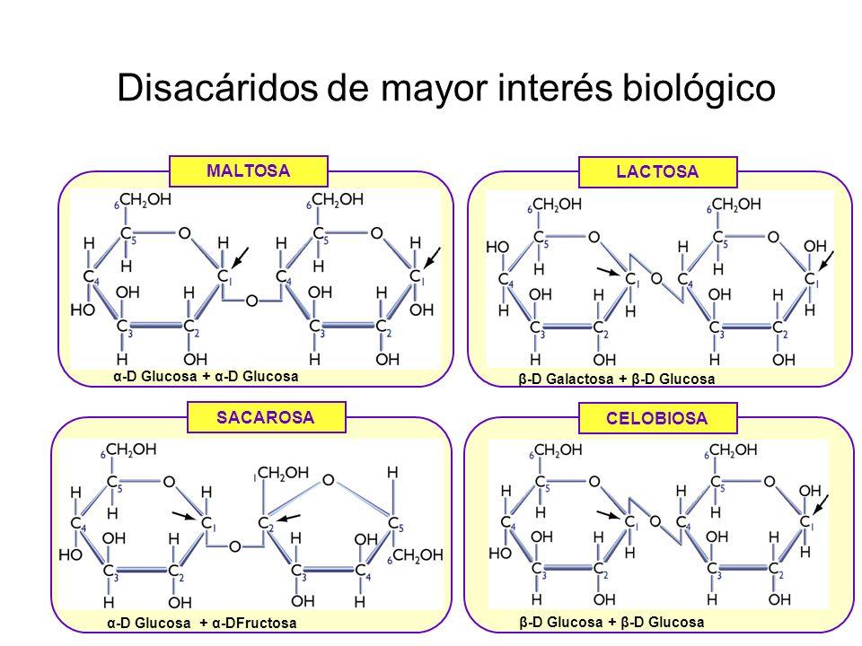 estructura quimica de los hidratos carbono yahoo dating