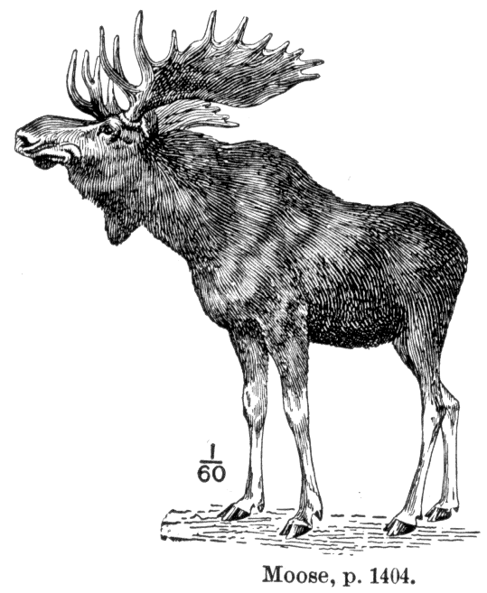Elch – Wikipedia