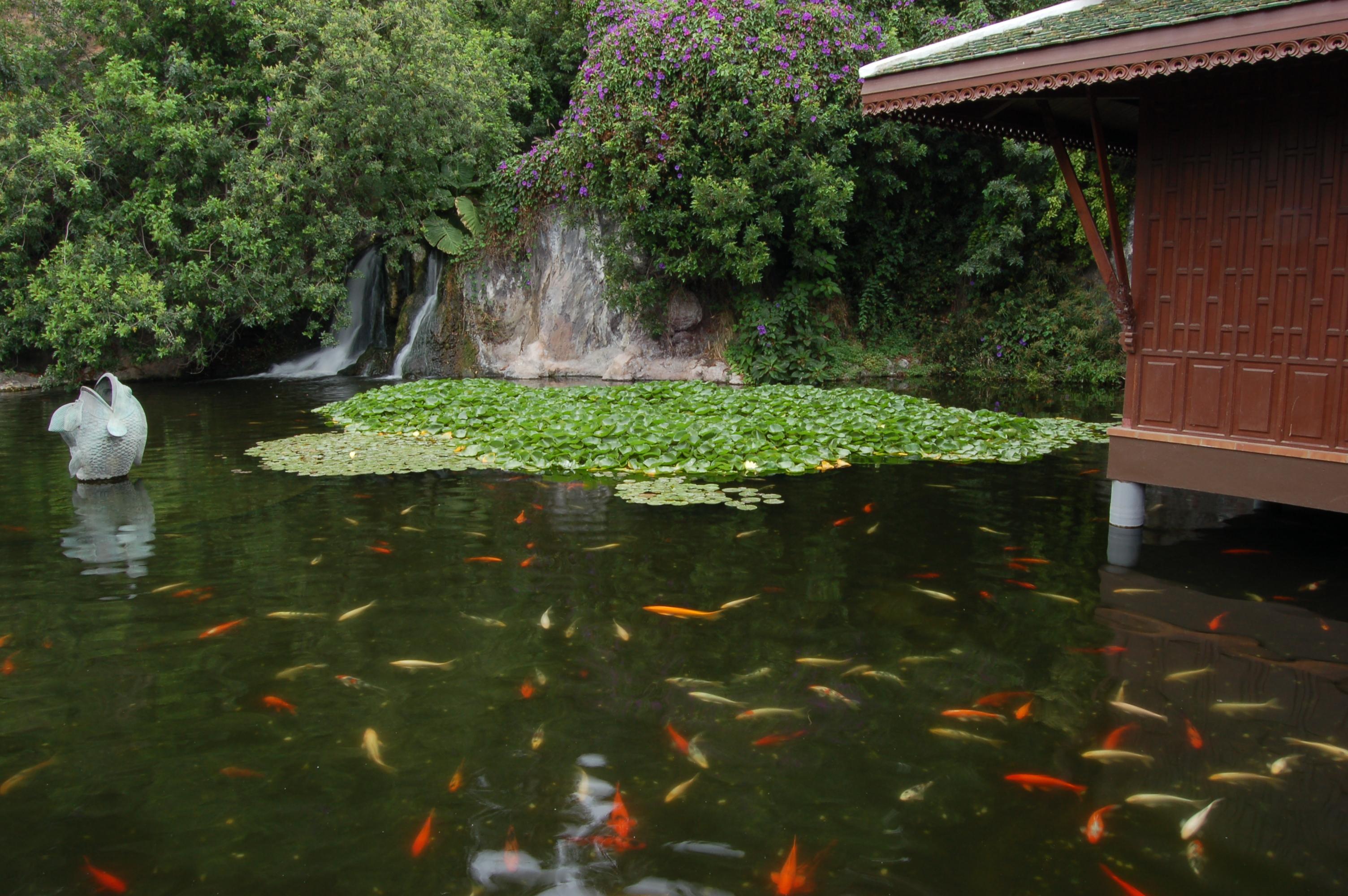 File estanque de carpas wikimedia commons for Estanque de carpas