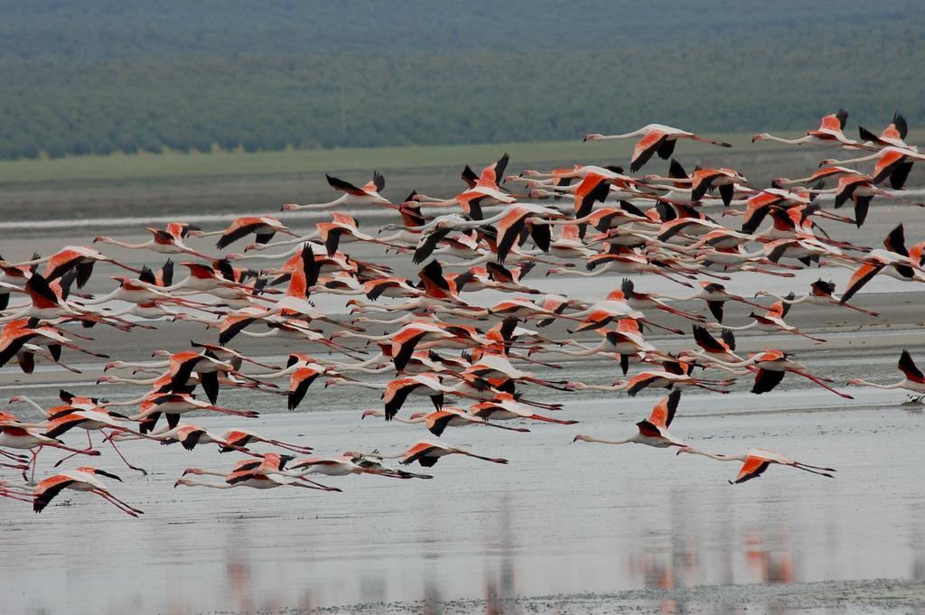 Laguna de Fuente de Piedra - Wikipedia, la enciclopedia libre