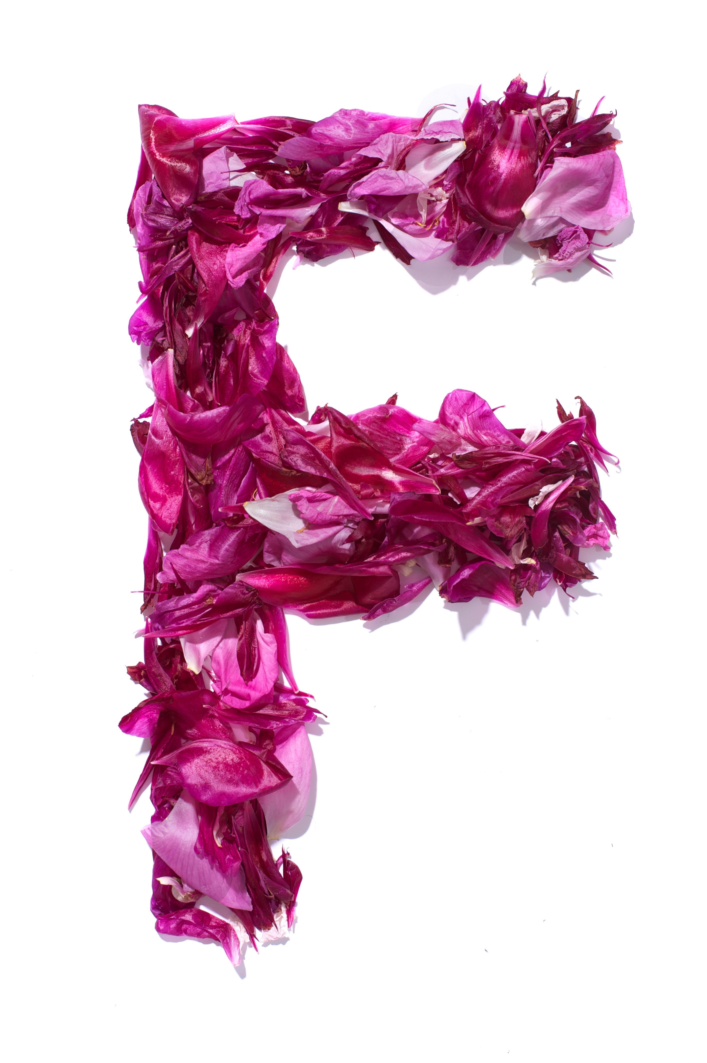 File:Flower Alphabet - F.jpg - Wikimedia Commons
