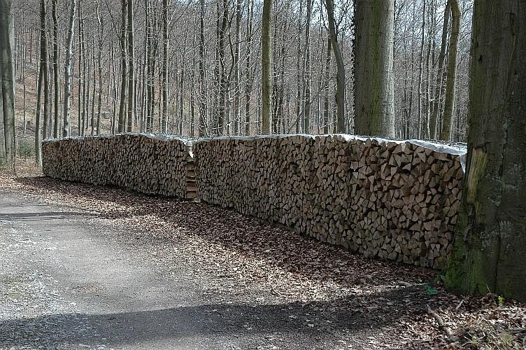 Buchen-Brennholz im Wald aufgearbeitet - Quelle: WikiCommons