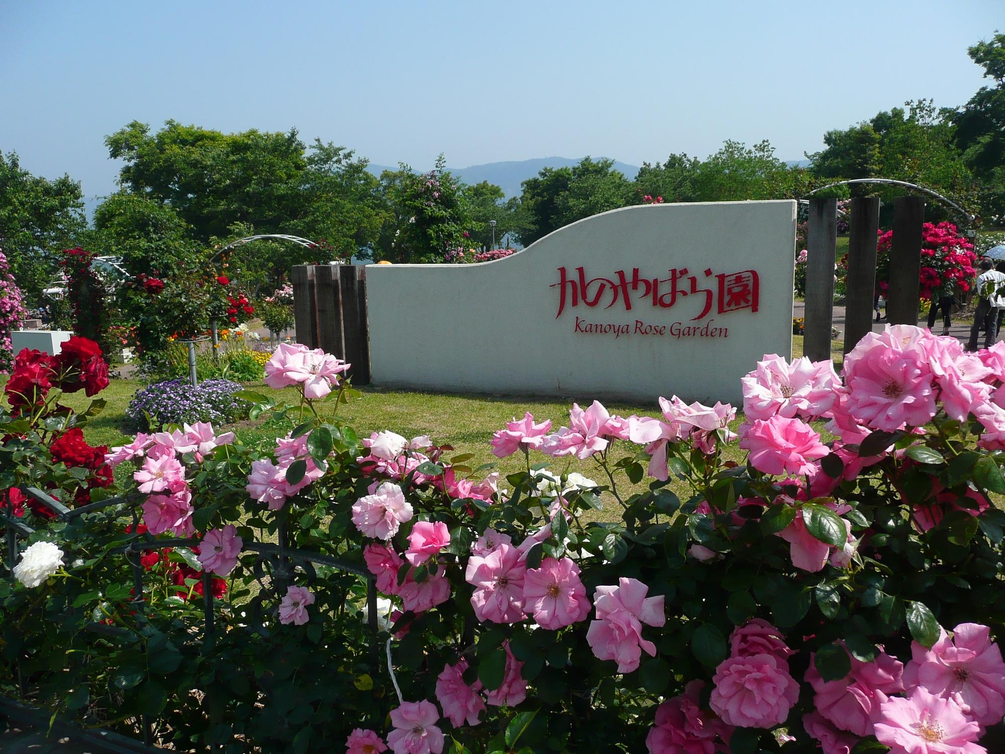 Description kanoya rose garden 002 jpg