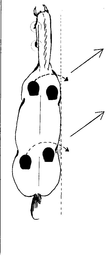 Leg-yield