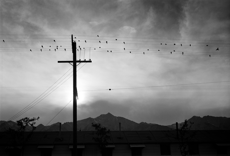 File:Manzanar birds on wire 00162ua.jpg - Wikimedia Commons