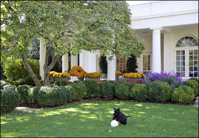 File:Oval Office view from Rose Garden.jpg
