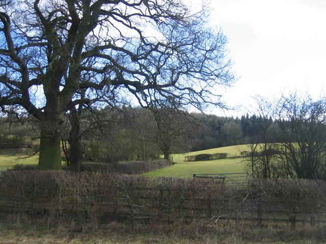 Oversley Wood - geograph.org.uk - 128744
