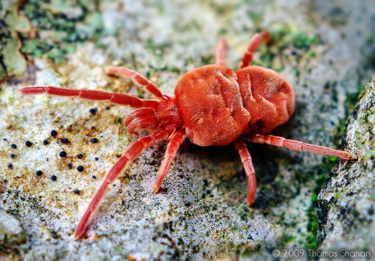 Jardinage attention aux ravages des araign es rouges en f vrier - D ou viennent les mites ...