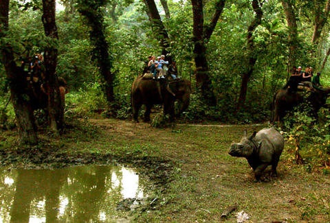 Elephant safari after the One-horned Rhinoceros in Royal Chitwan National Park, Nepal (photographed by Leonardo C. Fleck)