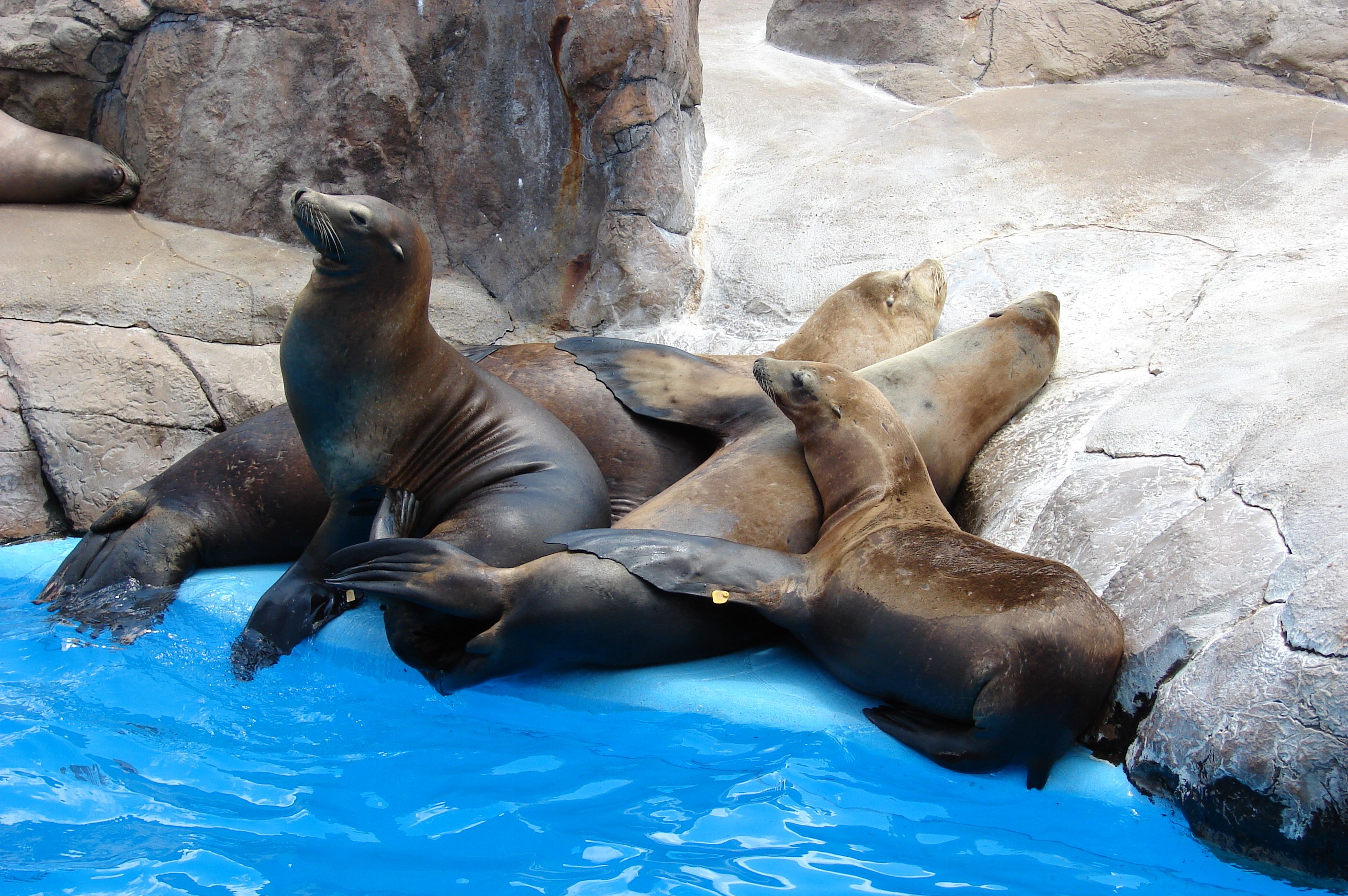 Description seals seaworld sanantonio 5292