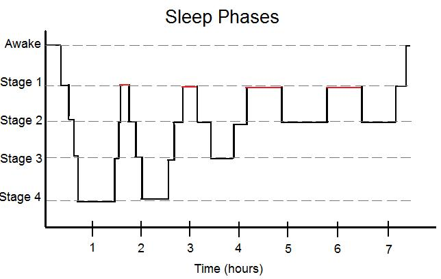 File:Simplified Sleep Phases.jpg - Wikimedia Commons