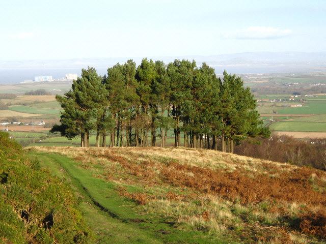 The Holford Memorial Plantation - geograph.org.uk - 1054455