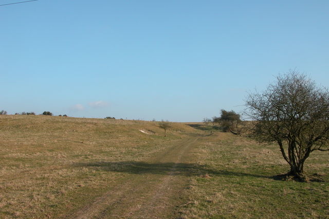 The South Downs Way climbing Gander Down - geograph.org.uk - 138733