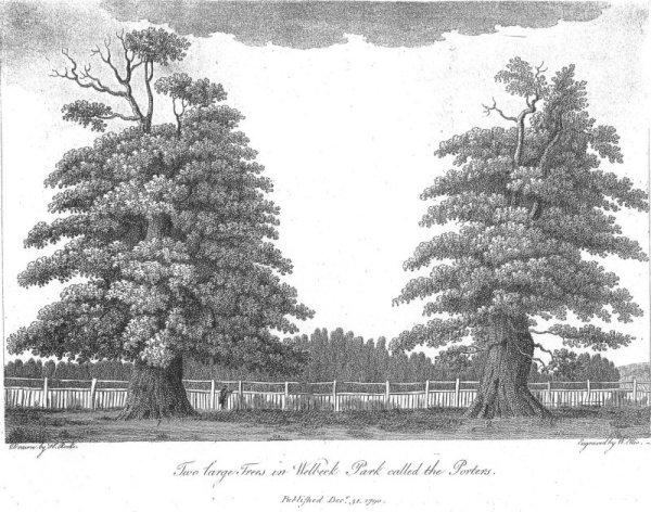 Welbeck Park