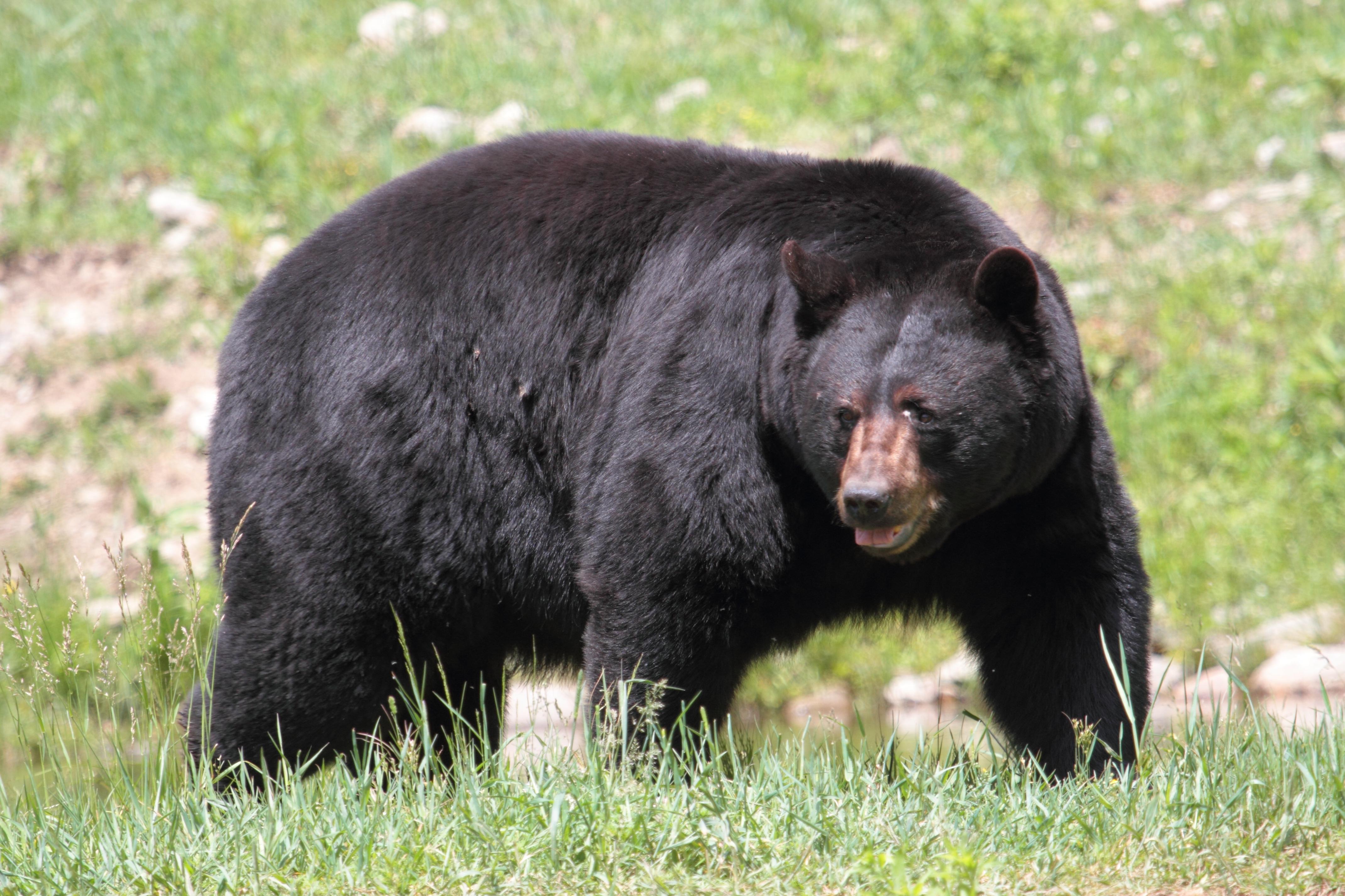 4 Things I Learned On My Washington Spring Bear Hunt Pics