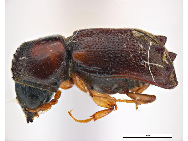 The Coleoptera of the British Islands Series