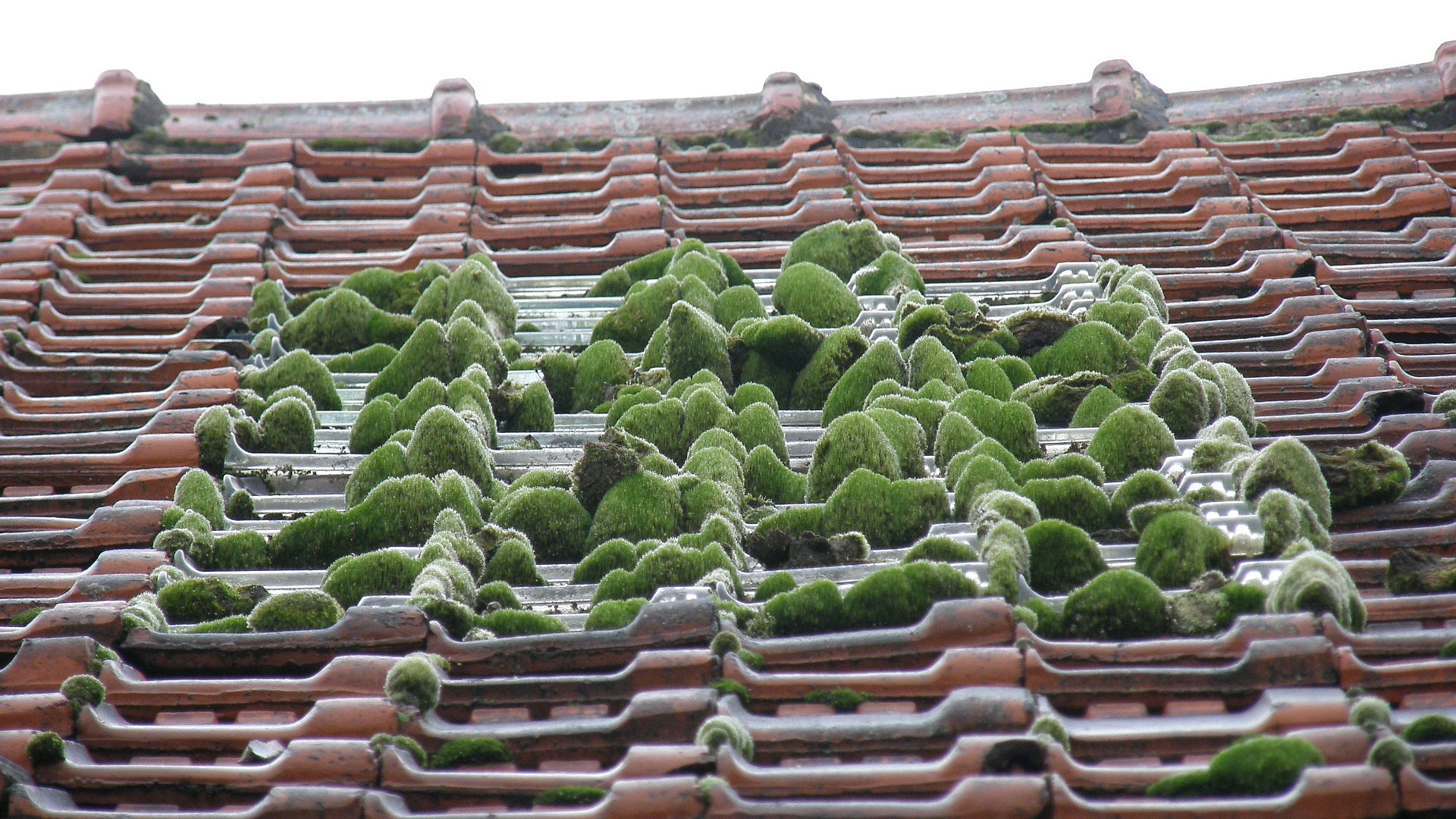 file zen little roof
