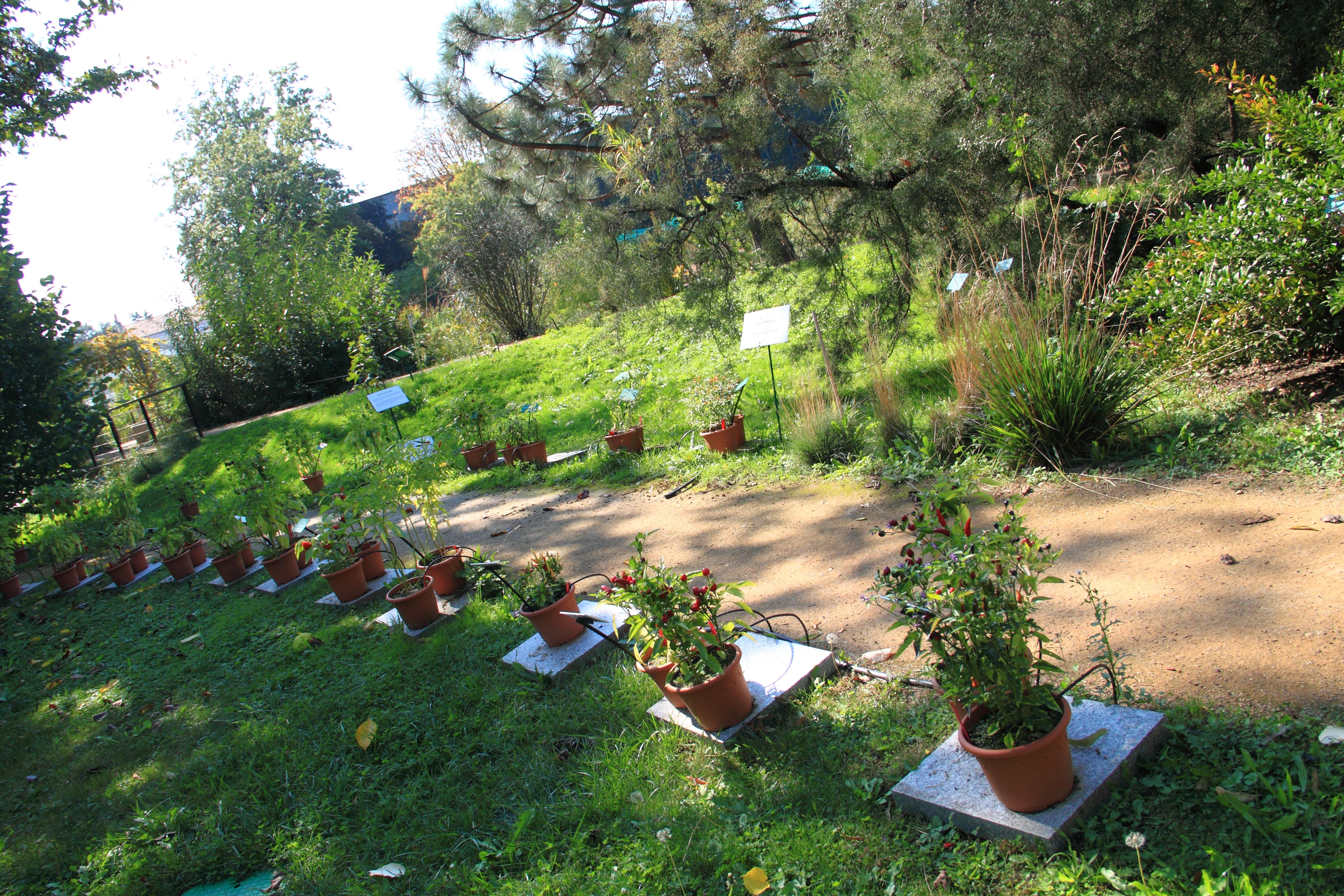 File Allée des piments Jardin Henri Gaussen Toulouse JPG