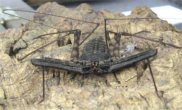 African Cave Dwelling Spider http://www.talkbass.com/forum/f34/spiders-scare-hell-outta-me-428446/index5.html