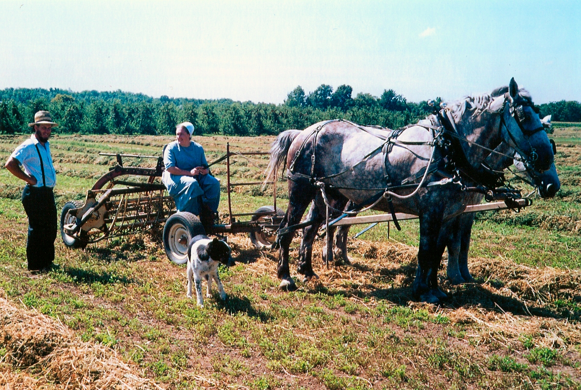 Family Plowing