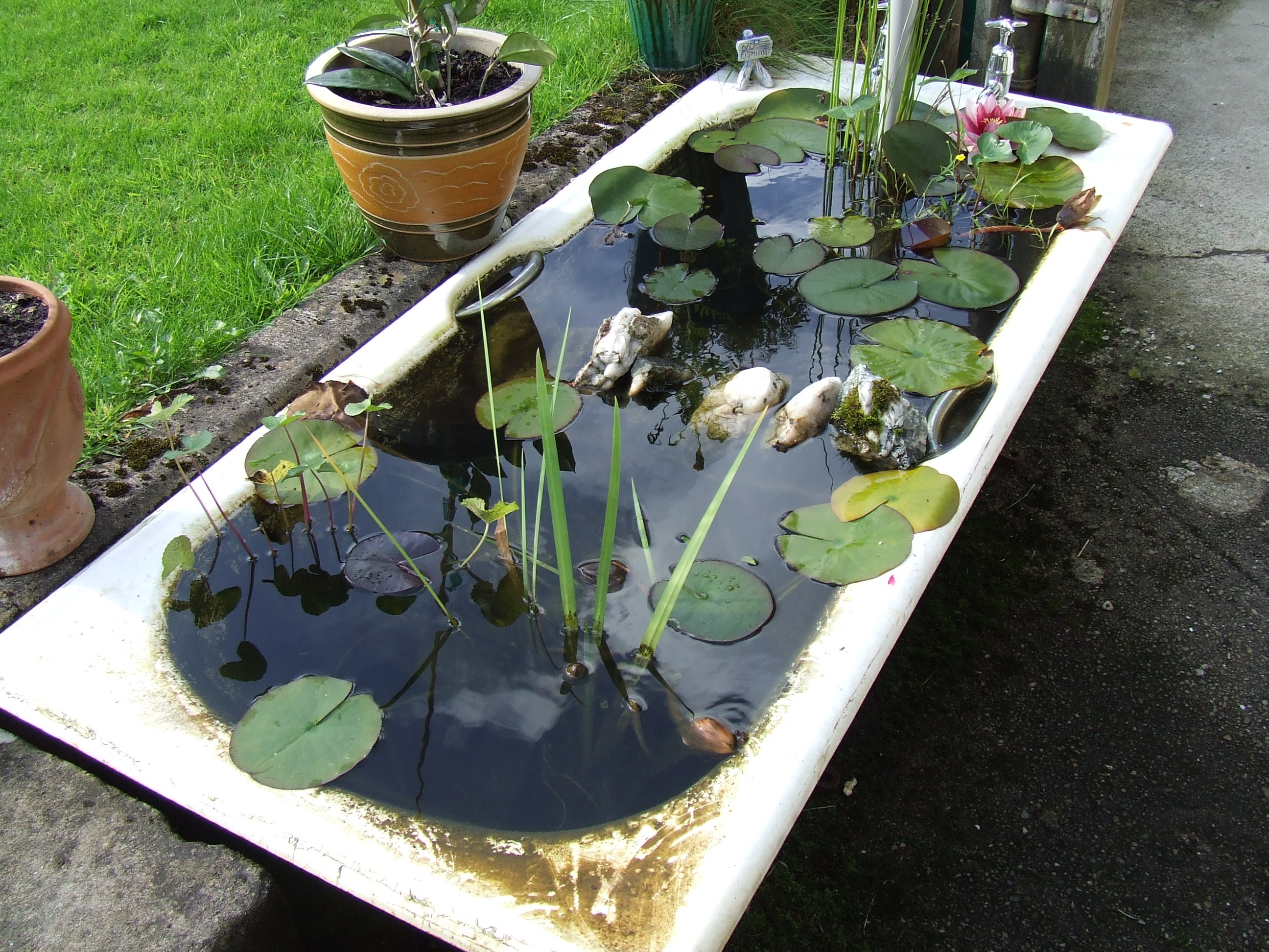 File:Bath Tub Fish Pond (2834517628)