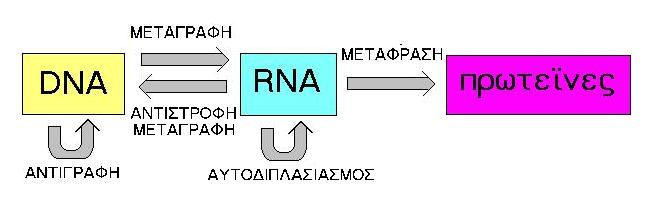 Filecentral Dogma Of Molecular Biology Old Elg Wikimedia Commons