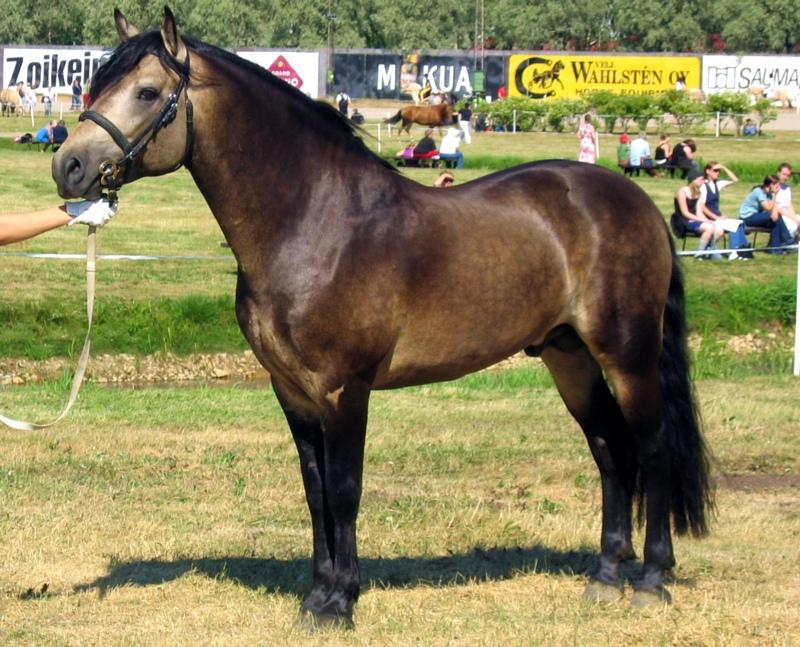 färgtyp hos hästar